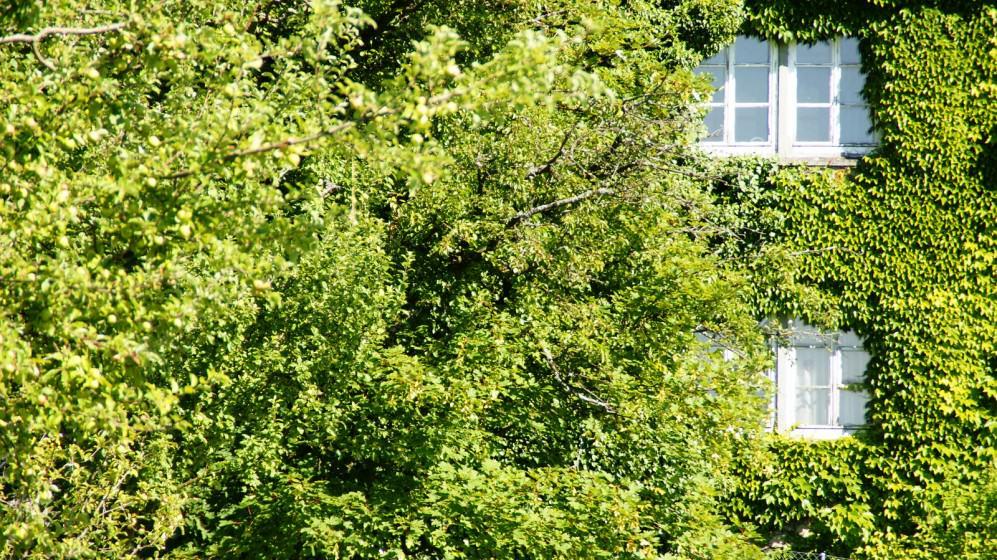 14) Green wall. Credit Swiss.piton