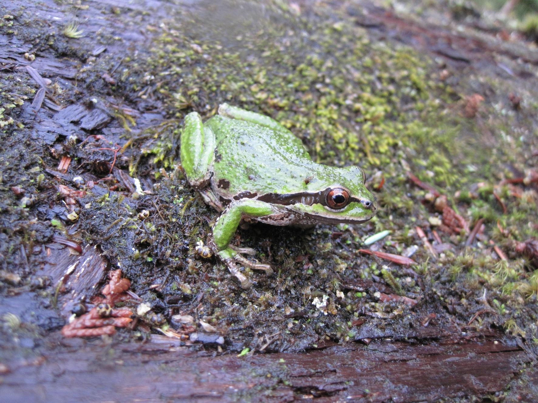 Features13_Amphibians5