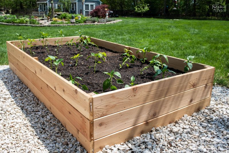 diy raised garden bed with pepper sprouts