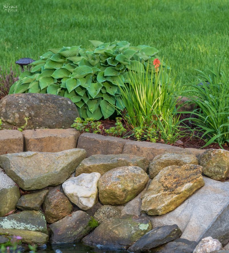 The Pond Project – Two Years Later   DIY pond and backyard makeover   DIY Pond and garden landscaping ideas   Tips on landscaping a lush garden   Plants that work great in pond landscaping   Almost no-maintenance plants for your sun garden   How to easily maintain a pond   What to plant around a pond   Pond and backyard reveal   #TheNavagePatch #DIY #Pond #Landscaping #Garden #HowTo   TheNavagePatch.com