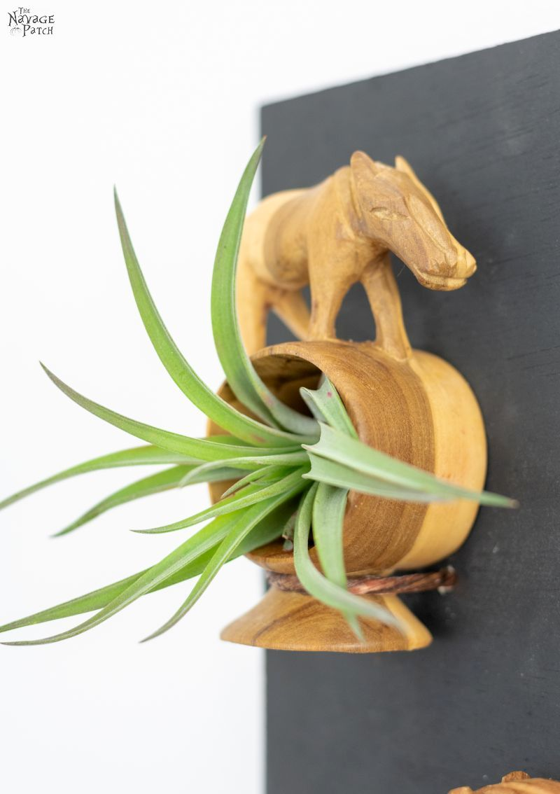 DIY Air Plant Holder