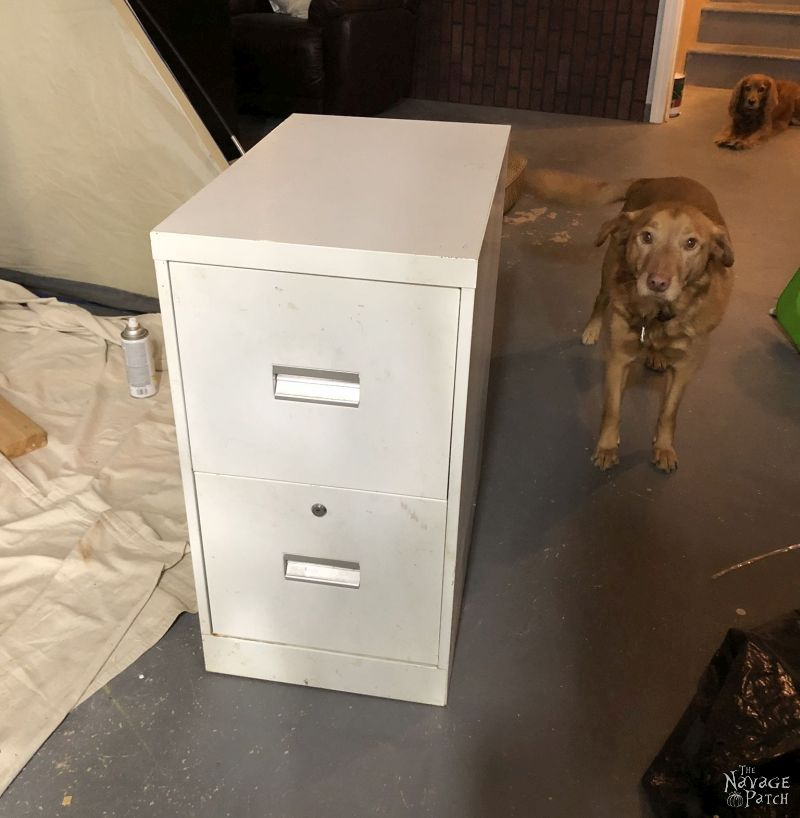 dog next to a metal filing cabinet