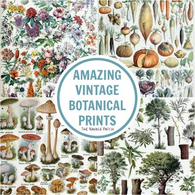 Free Printable Vintage Botanical Prints - TNP
