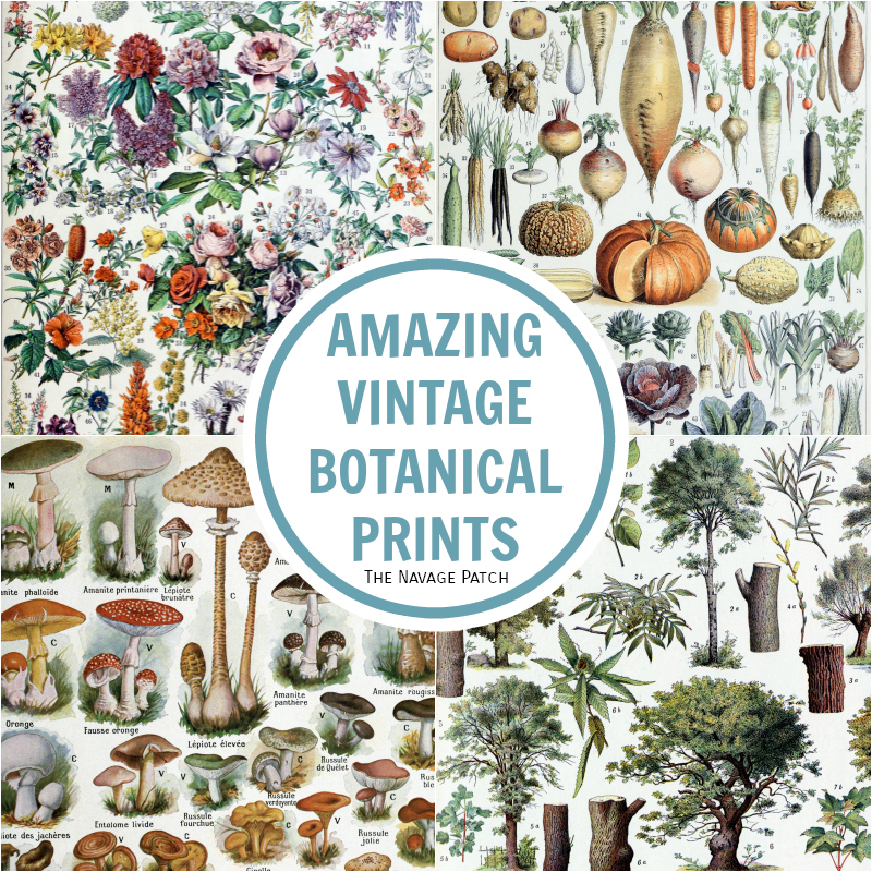 Free Printable Vintage Botanical Prints - TNP