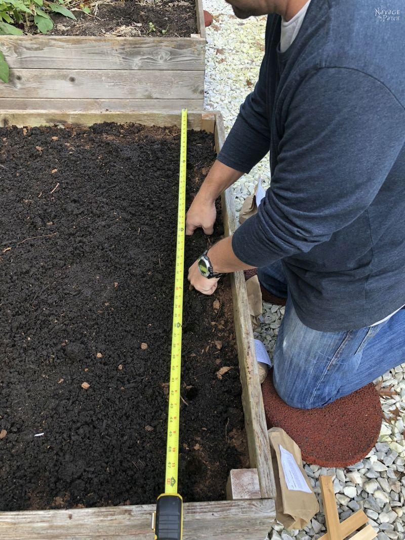 preparing soil for garlic planting