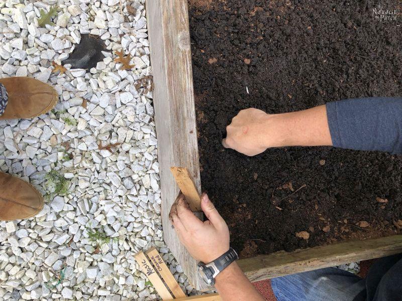 preparing to plant garlic