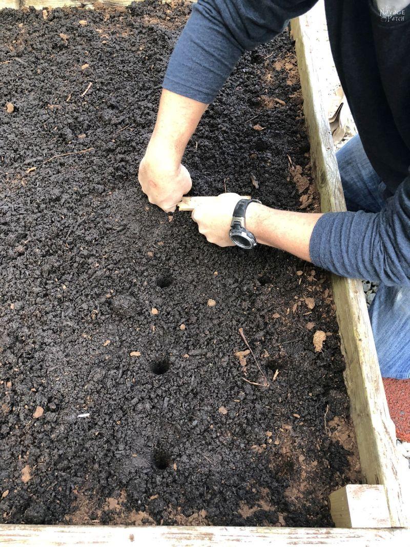 planting garlic in a raised garden bed
