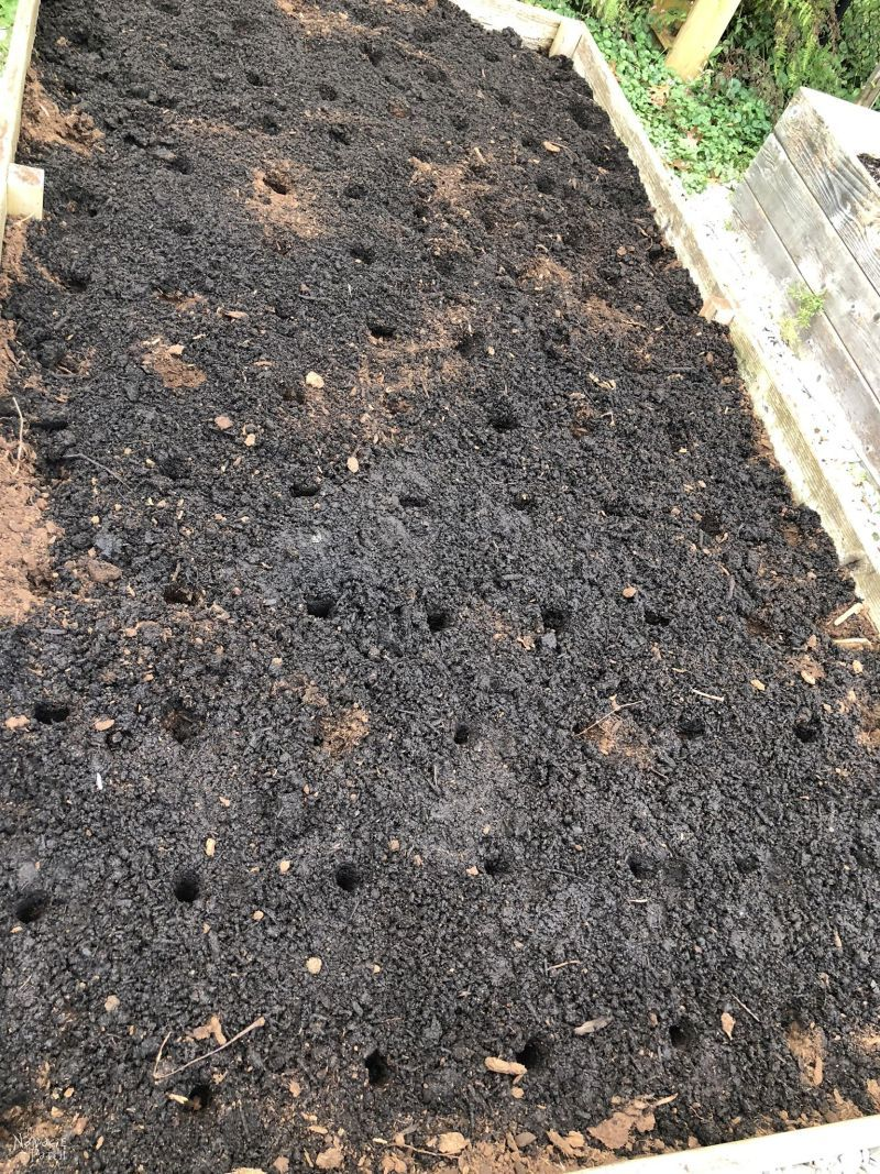raised garden bed prepared for garlic planting