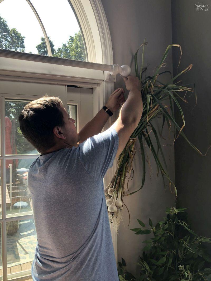 hanging garlic to cure