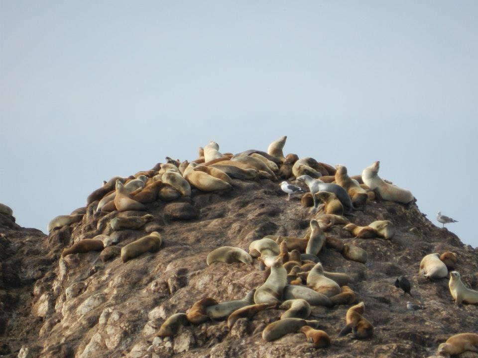 Sea Lions; Photo by Angie Crawford