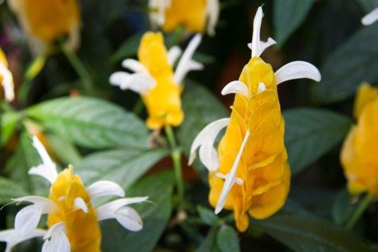 United States Botanic Garden - Washington DC