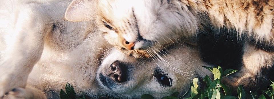 التأمين على الحيوانات الأليفة