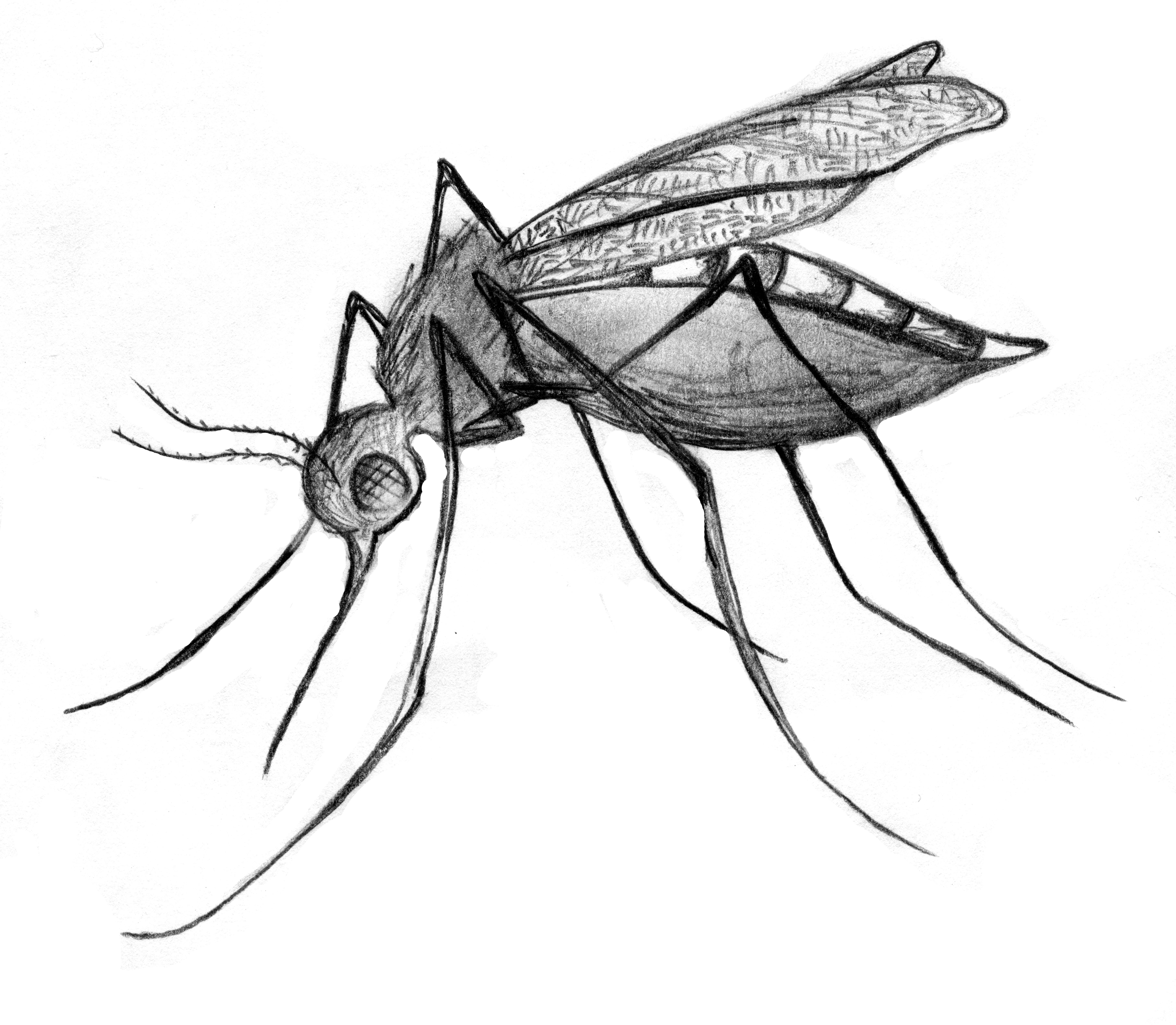 Mosquito2 The New Journal