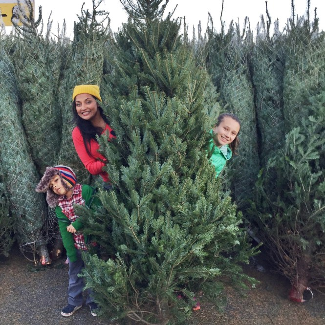 Best Christmas Tree Farms Near New York City