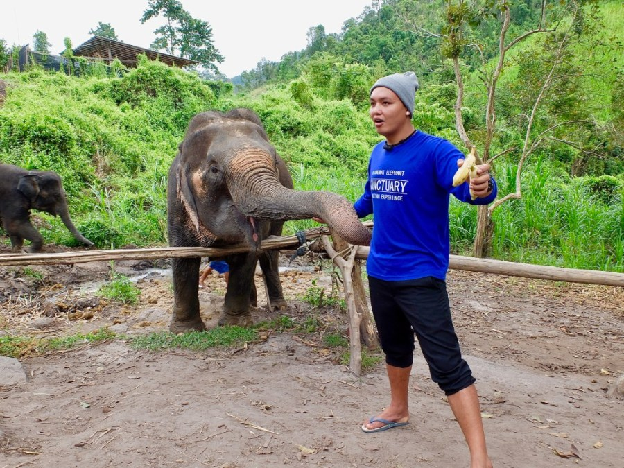 tour guide at elephant sanctuary