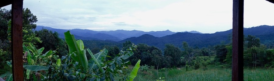 panoramic view of jungle in thailand