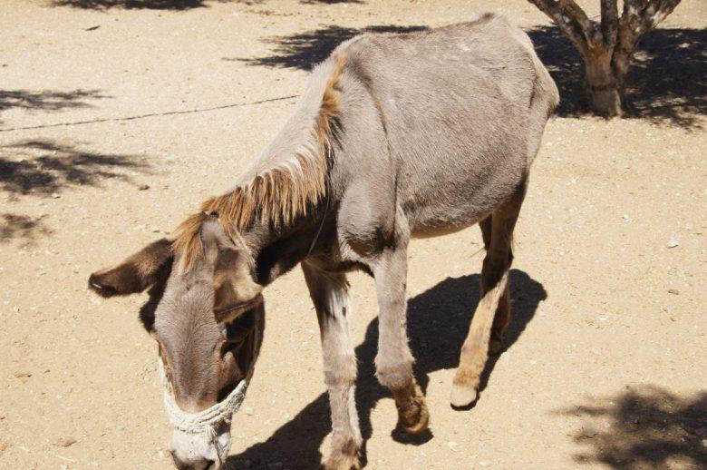 sanctuary donkey