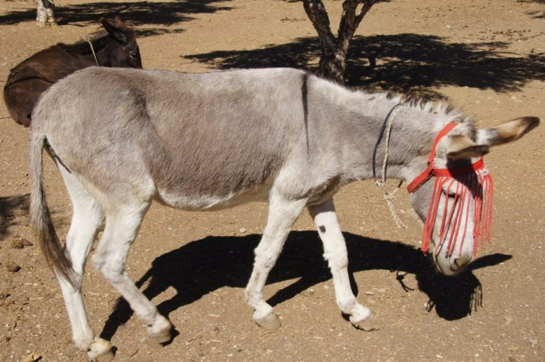 sanctuary donkey with fly fringe
