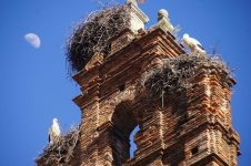 Storks Plasencia Spain