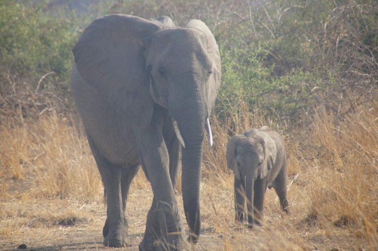 Elephant mama and baby - ethical elphant riding