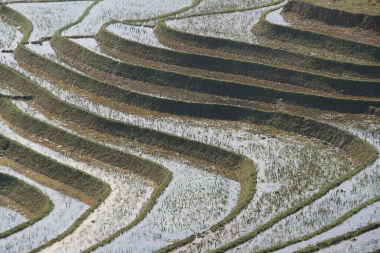 Rice terraces near Sapa, Vietnam