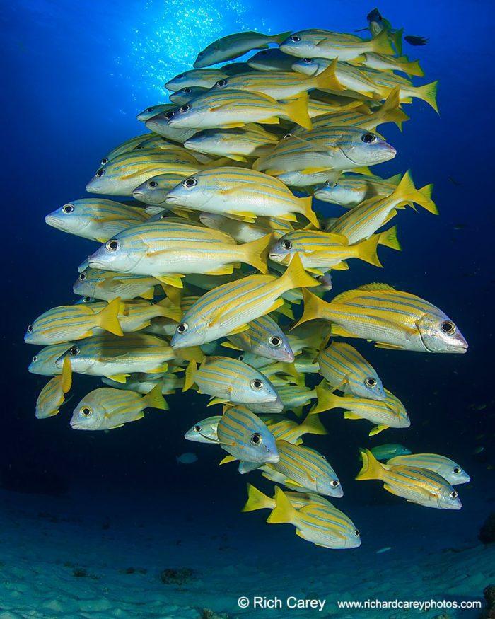 Rich Carey, Similan, underwater, photography, photographer, fish, deep, blue, travel, scuba, dive, tour