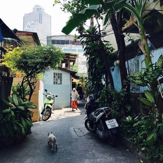 Bangkok, street, photography, guide, tips, cat, adventure, iphone7