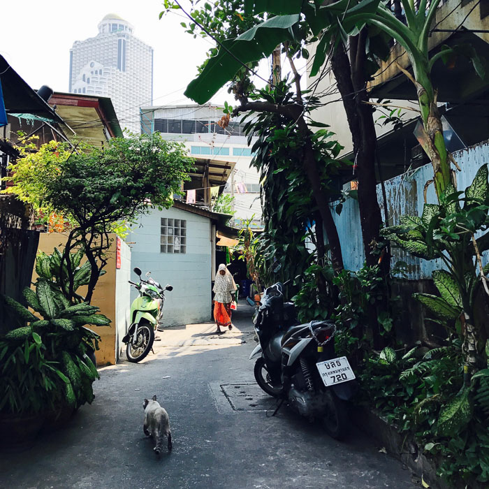 Bangkok, street, photography, guide, tips, cat, adventure, iphone7