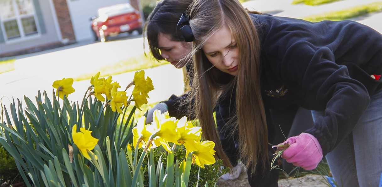Katie Farris (foreground) and Emily Harris (background) rid a garden of weeds at the Hilleke residence on April 13, 2013 in Highland Heights, KY. Members of Phi Sigma Sigma sorority, they were among a handful of volunteers participating in NKU's