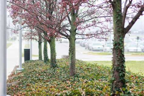 NKU's own forest: the beautification project
