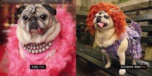 Pugs Pet Halloween Costumes