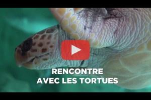 theo-cheval-video-2019-aquarium-biarritz-animation-tortues