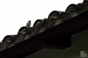 photographe-bayonne-parc-naturel-ansot-14