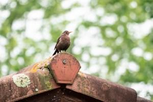 photographe-bayonne-parc-naturel-ansot-15
