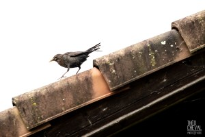 photographe-bayonne-parc-naturel-ansot-16