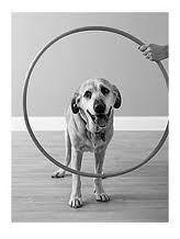 dog-and-hoop1