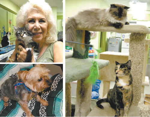 Photos by Karen Zautyk Clockwise, from l.: Kathy Johnson with one of the many kittens up for adoption; two of the cats available; and Tina, a Yorkshire terrier.