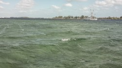 key west tarpon03