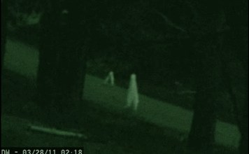 Ghost Videos: The Fresno Nightcrawler Mystery