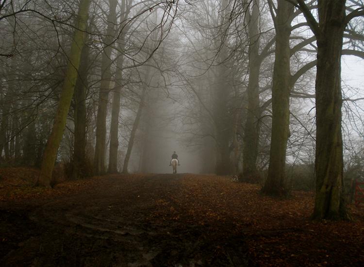 Une promenade dans les bois: 7 des forêts et des bois les plus hantés du monde