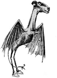 the jersey devil, the occult section, new york paranormal society