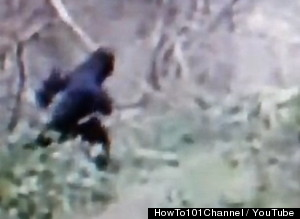 Bigfoot Caught on Video in Ohio | The Occult Section