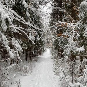 John Pond Trail Adirondacks