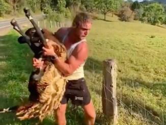 Former Australia wing Nick Cummins rescuing a sheep.