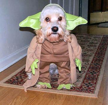 Yoda Dog Halloween Costome