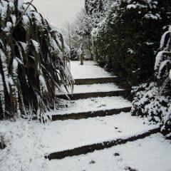 Winter 1pic