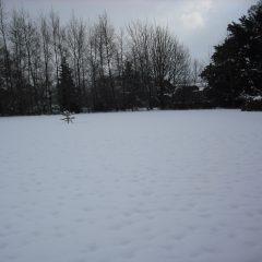 Winter main garden