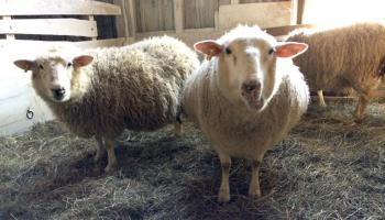 City Slickers to Profitable Farmers - The Old Walsh Farm
