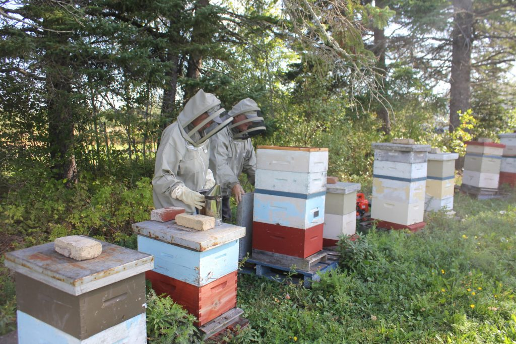 Benefits of beekeeping