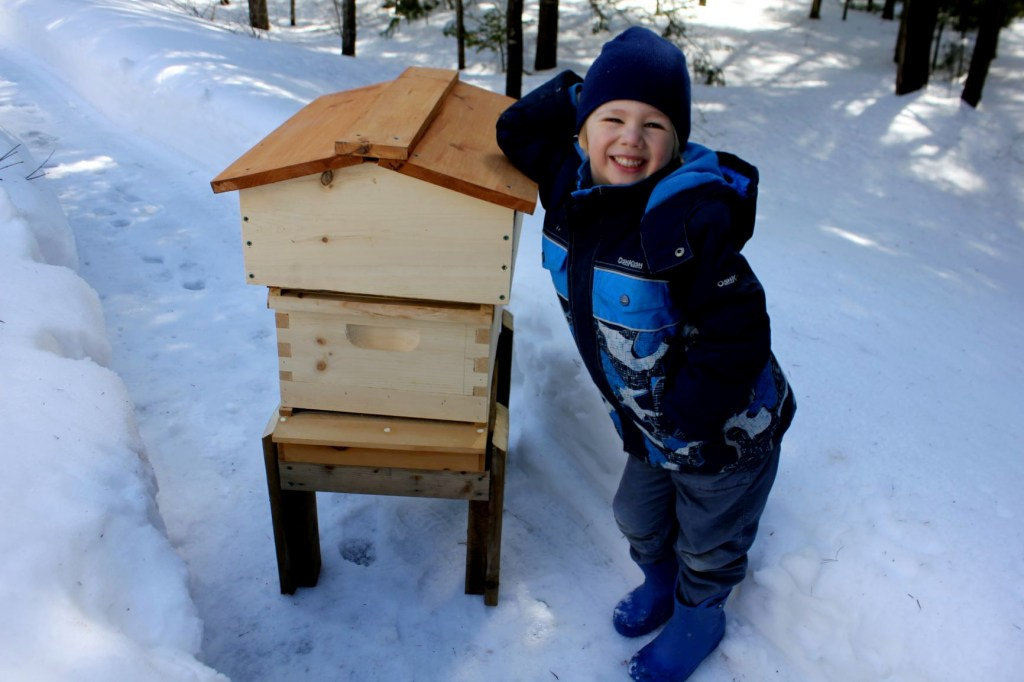 What is the best beehive for beginners?